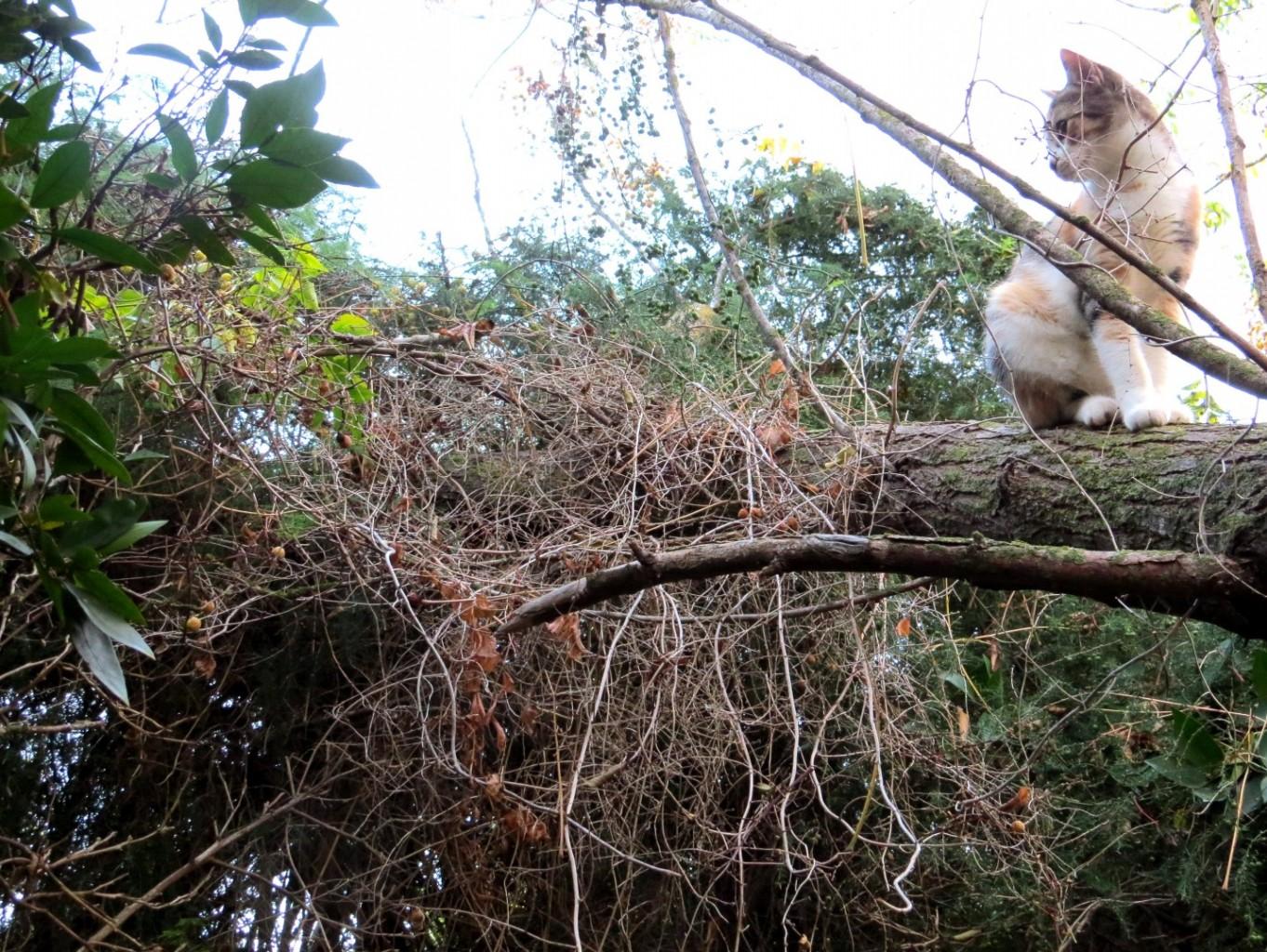 חתולה על עץ