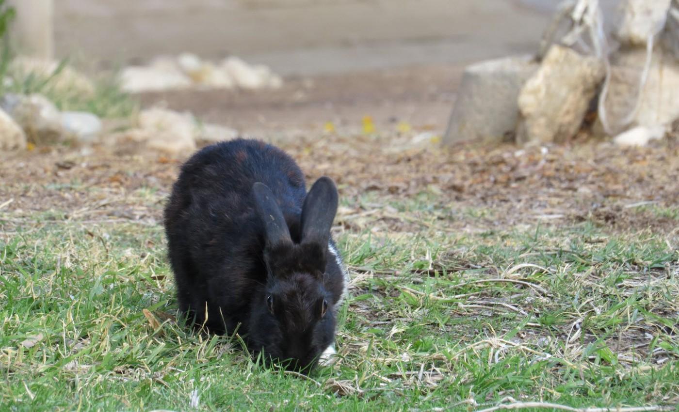ארנבון באשרם במדבר