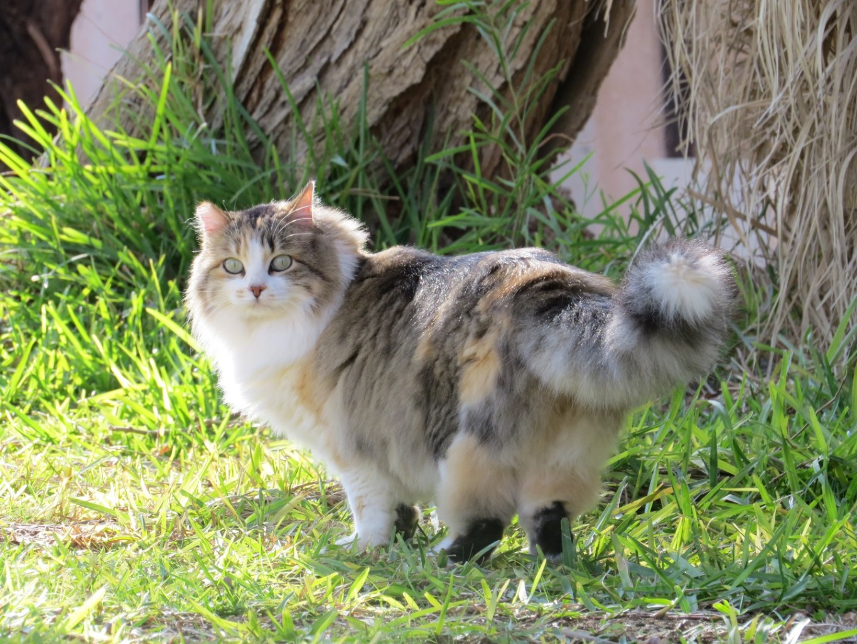 חתולה באשרם